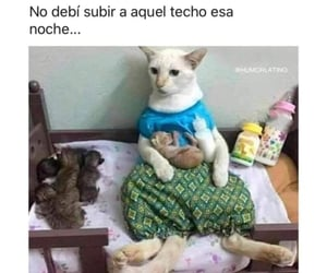 gato, Gatos, and meme image