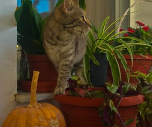 aesthetic, pumpkin, and animals image