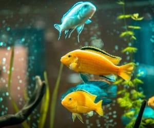 aquarium, fish, and fish tank image