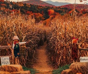 aesthetic, corn maze, and fall image