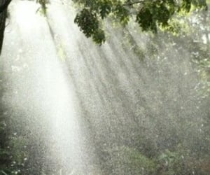 rain, forest, and sun image