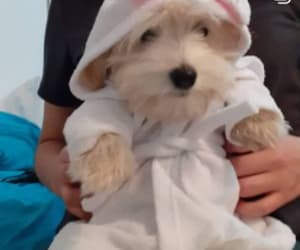 bath, cutie, and dog image