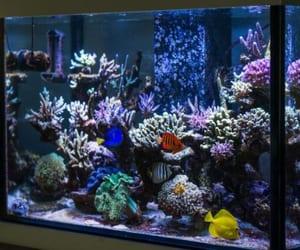 aquarium, cleaning, and clean image
