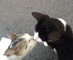 cat, kiss, and animal image