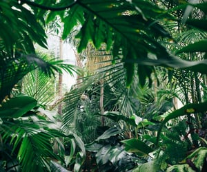 green, plants, and jungle image