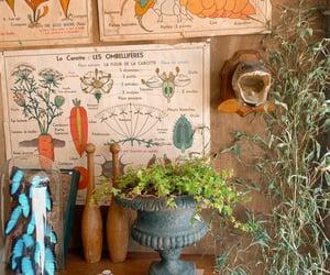 aesthetic, botanical, and botany image