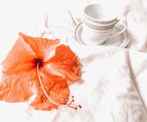 autoral, inspiration, and florish image
