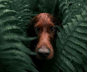 perro, explorar, and escondido image