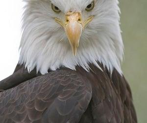 bird, eagle, and animal image