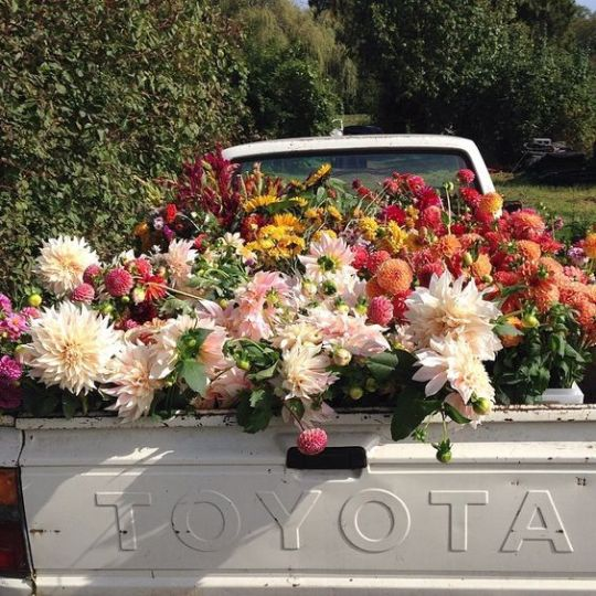 flowers, nature, and Toyota image