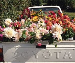 flowers, Toyota, and car image