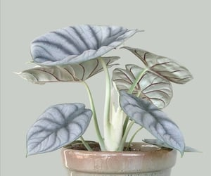 flower, gray, and grey image