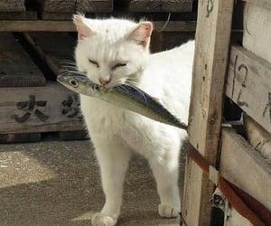 cat, animal, and fish image