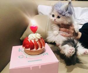 cat and birthday image