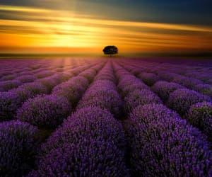 beautiful, field, and fields image