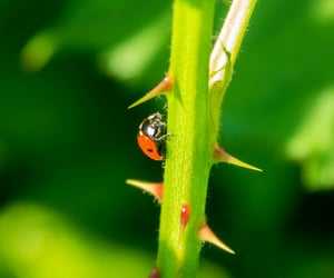 beetle, in the garden, and cute image