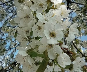 bloom, blossom, and weather image