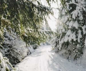 landscape, pines, and road image