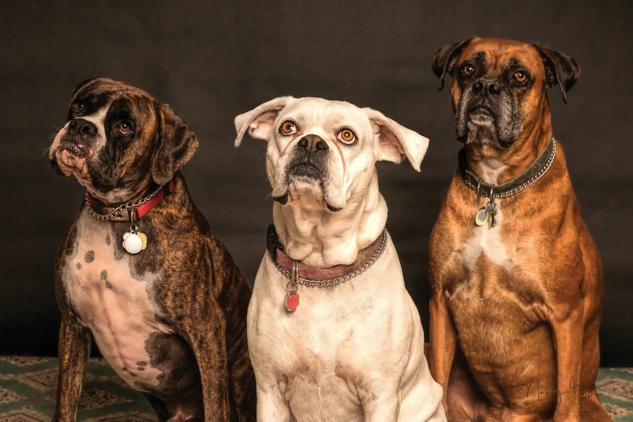 article, dog, and doggie image