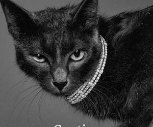 black, cartier, and cat image