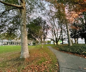 Auckland, New Zealand in Fall (June 2021)