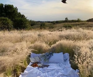 bed, book, and field image