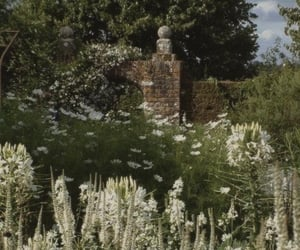 garden, soft, and cottagecore image