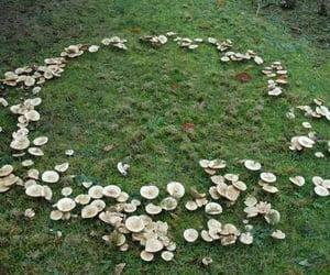 mushroom, fairy, and fantasy image