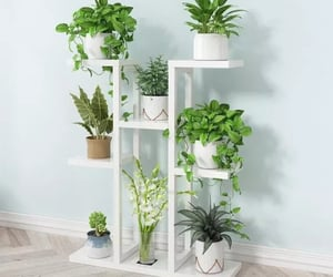 indoor plants, house plants, and succulents propagation image