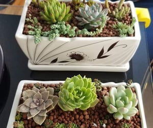succulents, indoor plants, and house plants image