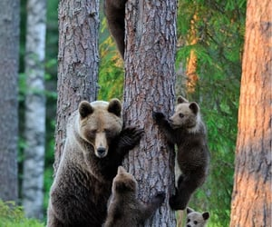 Brown bear with cubs in forest.