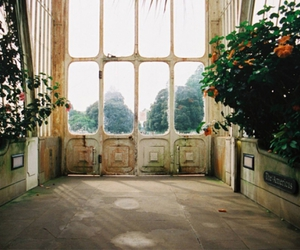 greenhouse, room, and light image