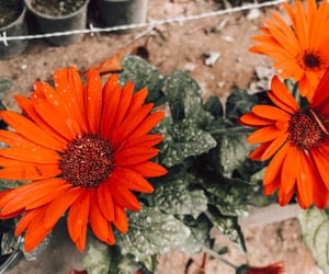 aesthetic, flowers, and nature image