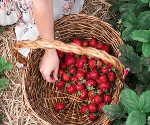 basket, strawberries, and picking image
