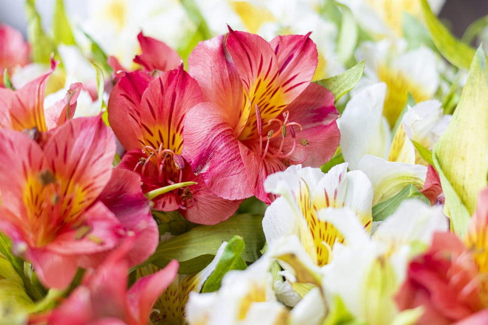 flowers, flores, and alstroemeria image