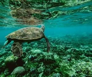 blue, sea, and turtle image