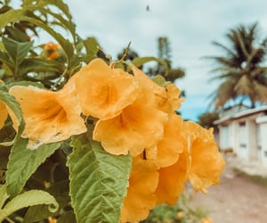 bloom, flowers, and landscape image