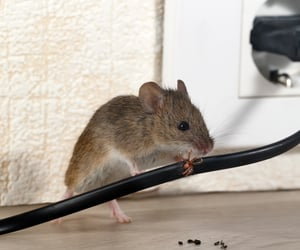 mice control notting hill image