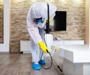 pest control, spider control, and flea control image