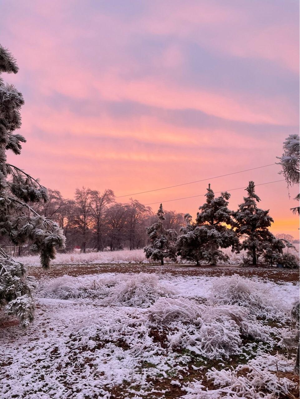 pine trees, sky, and snow image