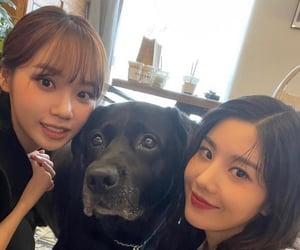 kpop, chaewon, and kim chaewon image