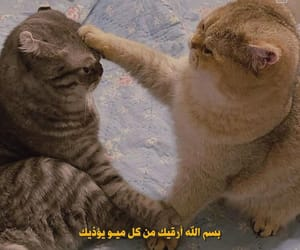 arabic, cats, and funny image