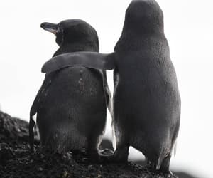 nature, penguin, and penguins image