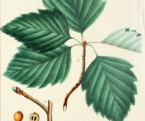 trees, pictorial works, and woody plants image