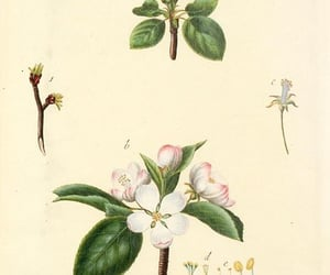 trees, bhl:page=43011668, and shurbs image