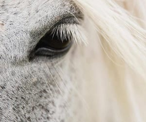 animals, horses, and photography image