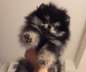 dog, pet, and taehyung image