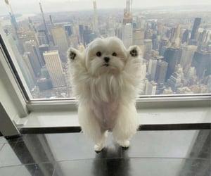 aesthetics, city, and puppy image