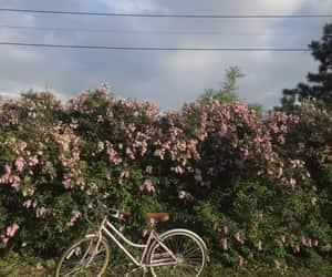 bike, soft, and cottagecore image