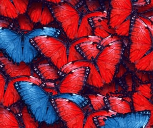 aesthetics, butterflies, and red lips image